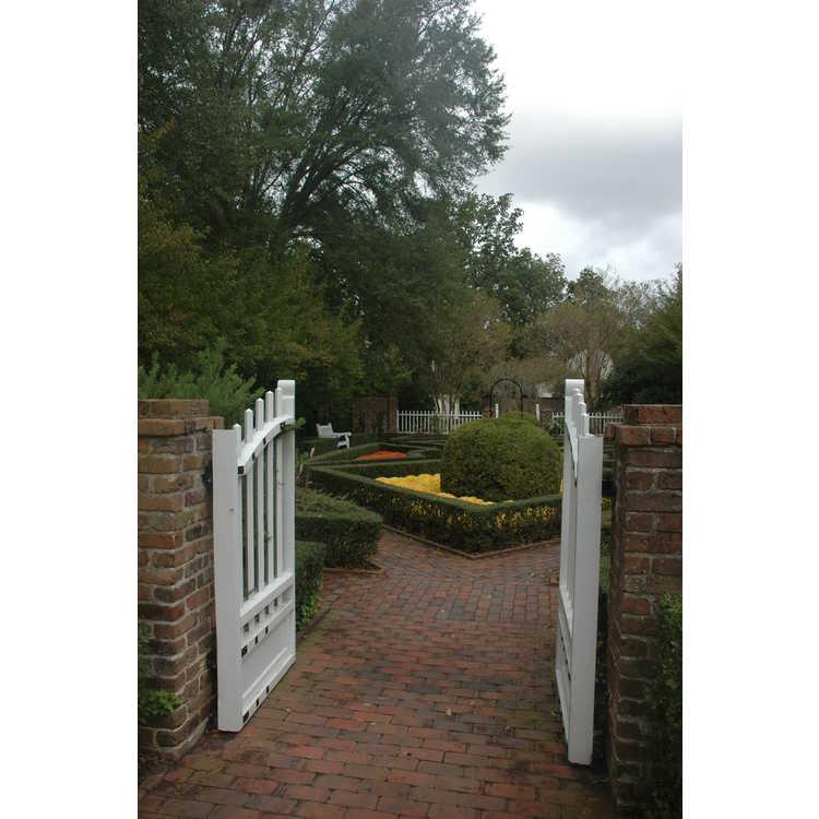 Gertrude S. Carraway Garden