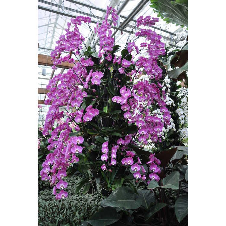 Fuqua Orchid Center