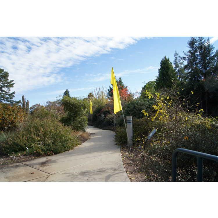 Nannie B. Andrews Stair Cascade Garden