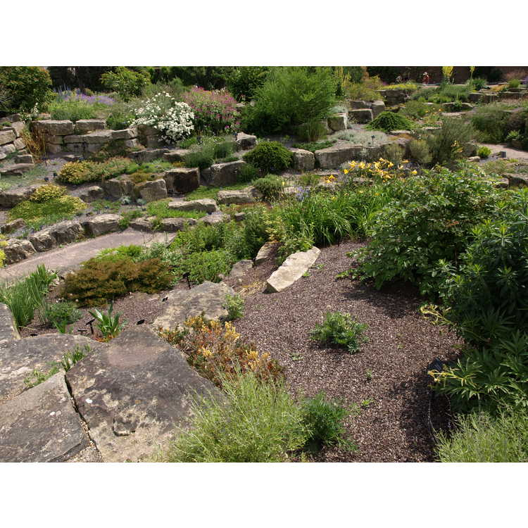 alpine rock garden