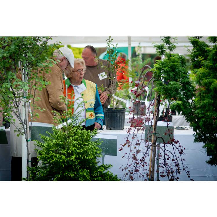 garden_gala2013-244.JPG