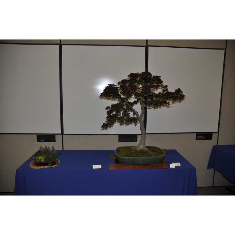 Jc Raulston Arboretum Photographs Triangle Bonsai Expo