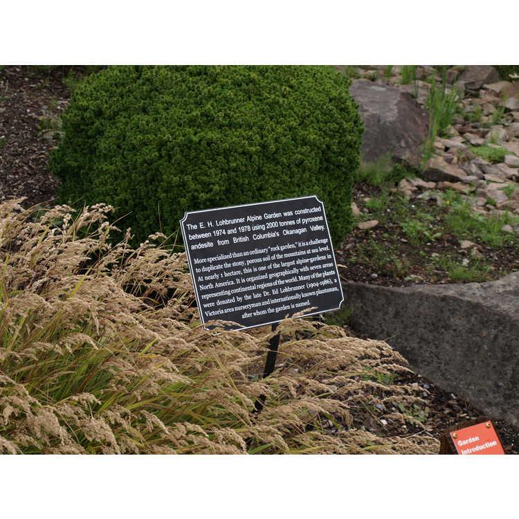 E. H. Lohbrunner Alpine Garden