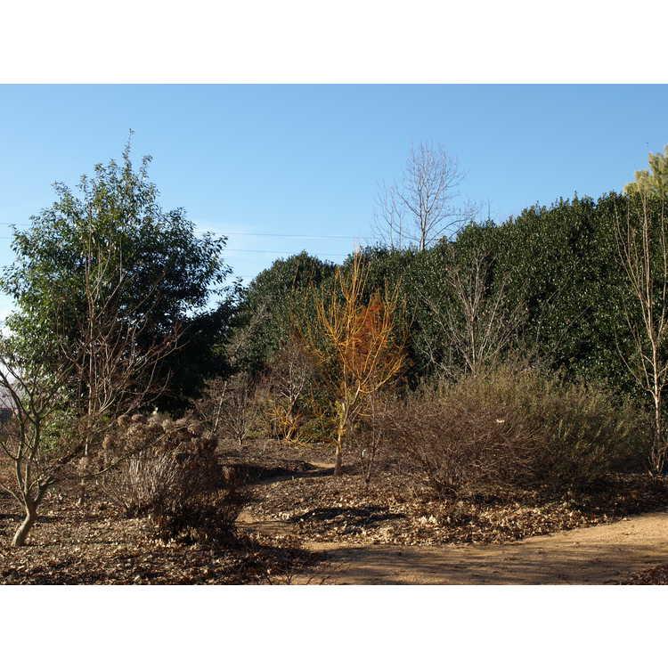 Plantsmen's Woods