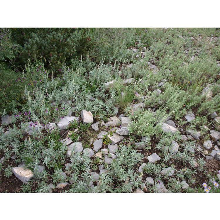 near Albuquerque
