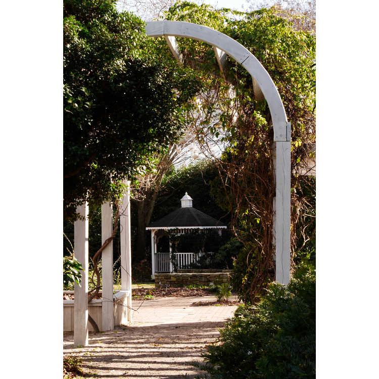 Klein-Pringle White Garden