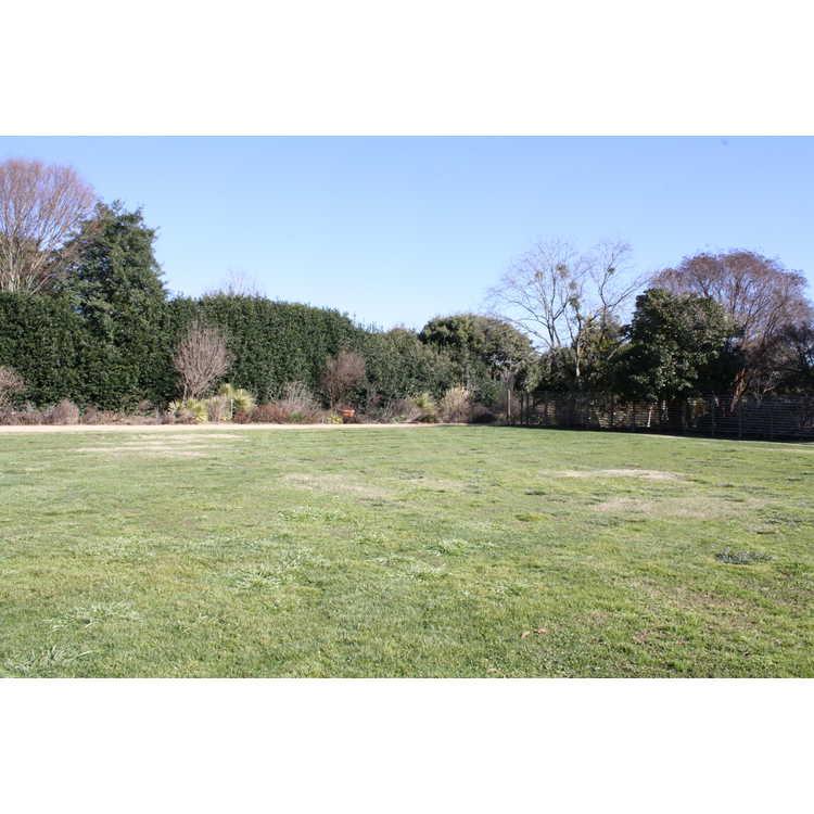 Great Lawn