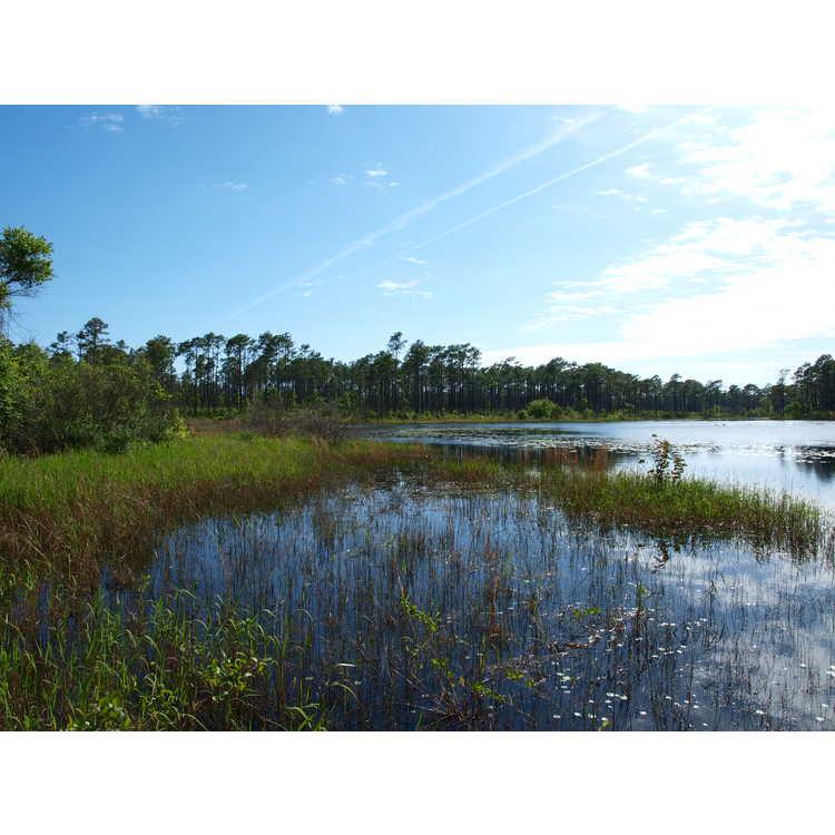 Broad Creek (near)