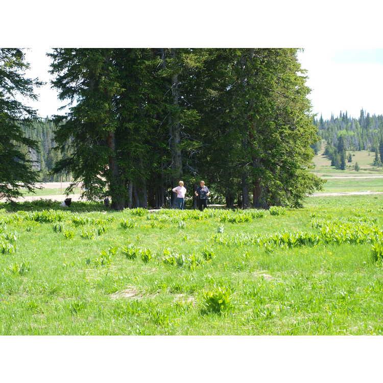 near Rabbit Ears Pass