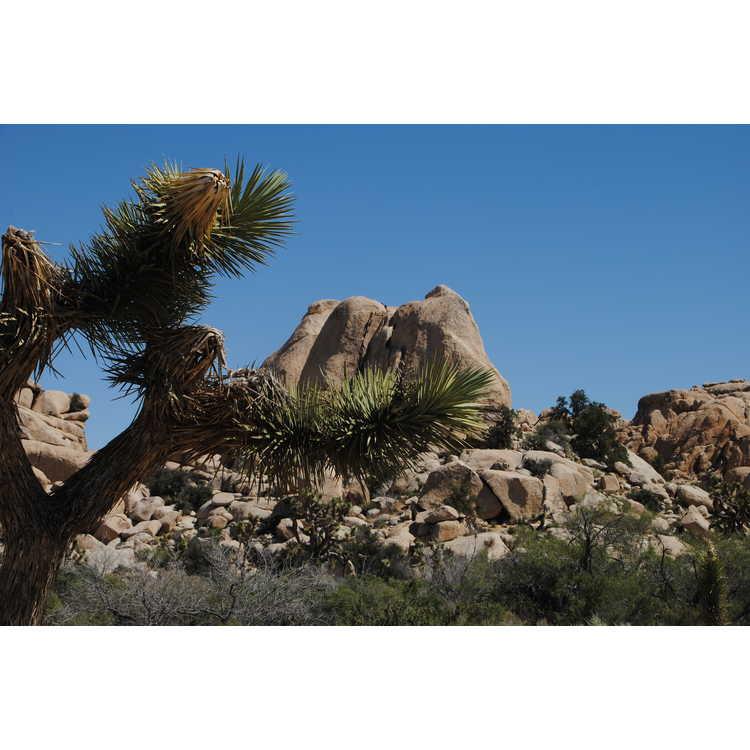 Twentynine Palms (near)
