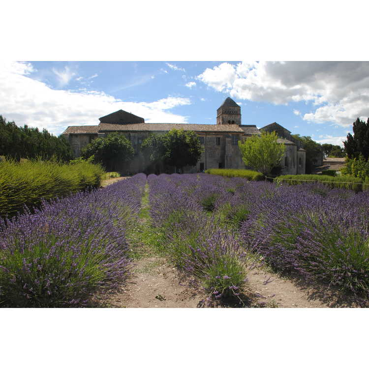 Saint-Rémy de Provence