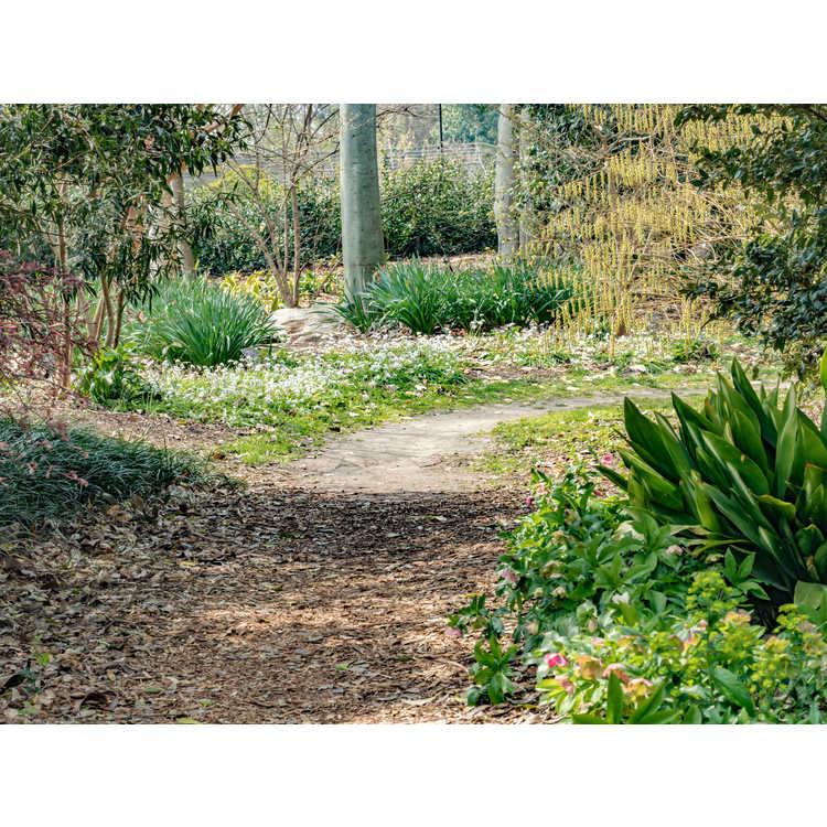 East Arboretum