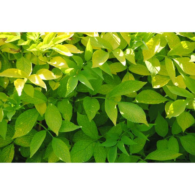 Hurst Green,