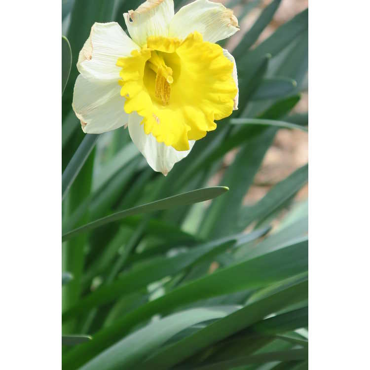 Narcissus General Patton