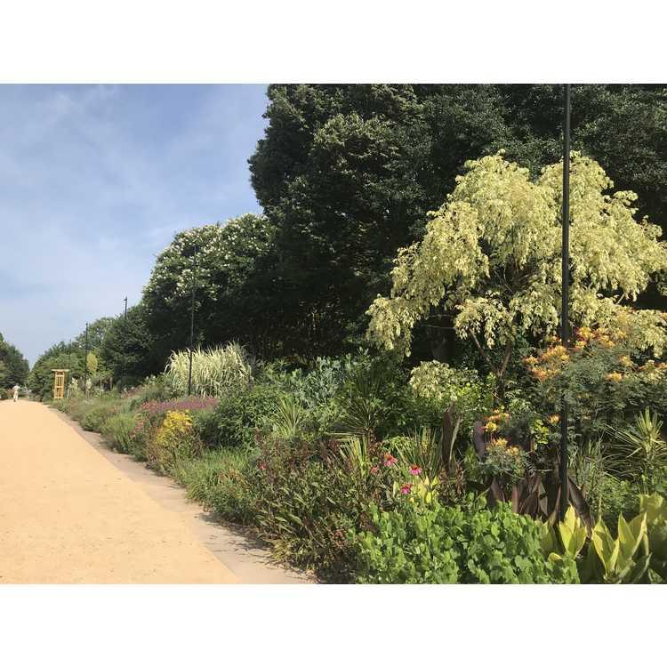 Perennial Border