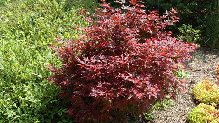 jc raulston arboretum jc raulston arboretum plant sale. Black Bedroom Furniture Sets. Home Design Ideas