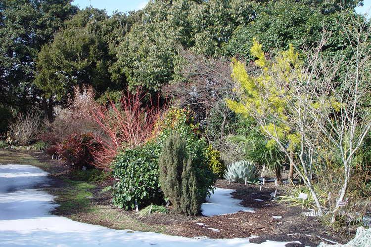 Snow melting in the Winter Garden