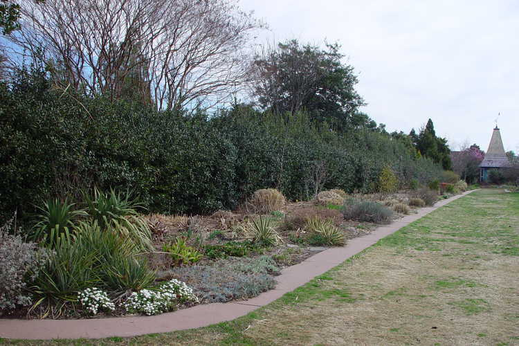 The Perennial Border with its pre-spring haircut
