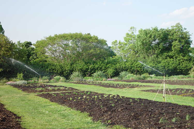Annual Trials and Demonstration Area was planted this week