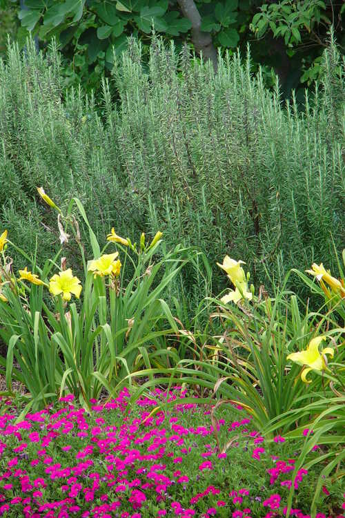 Daylilies light up the Paradise Garden