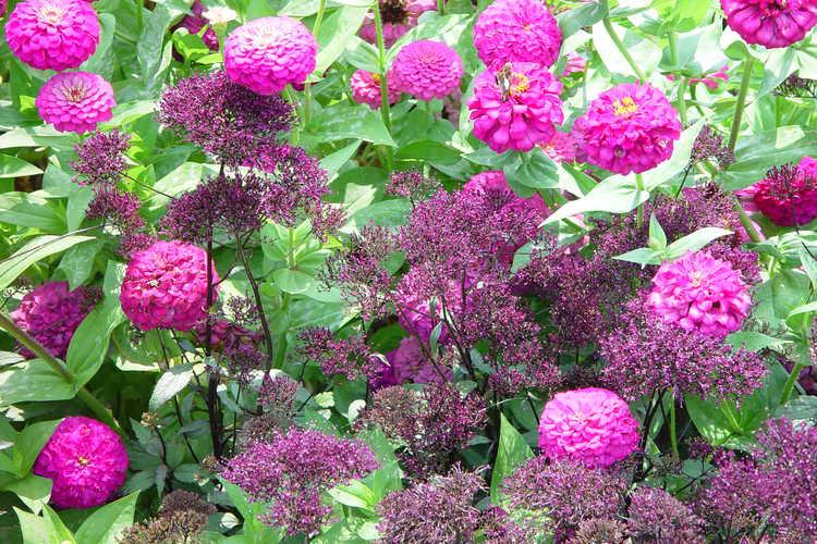 Purple beauties in the Paradise Garden