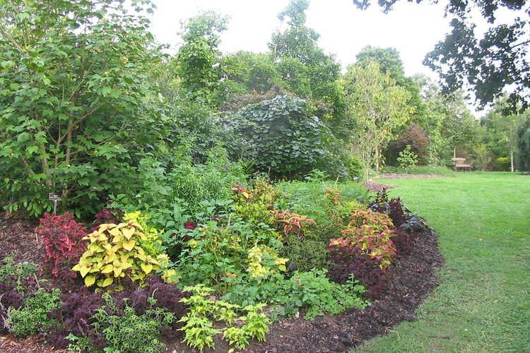Tender perennials near The Necessary