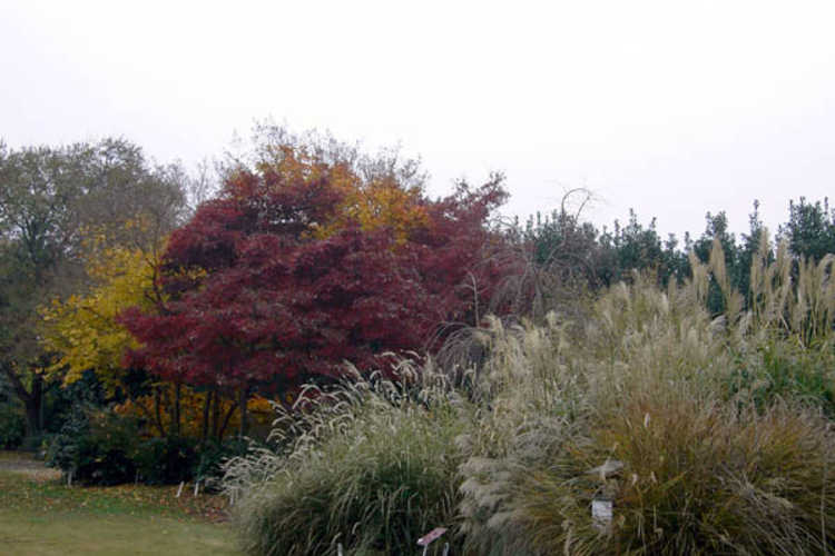 Fall scene in the Mixed Border