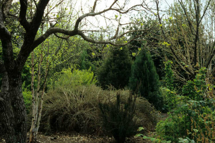 Beyond the Finley-Nottingham Rose Garden