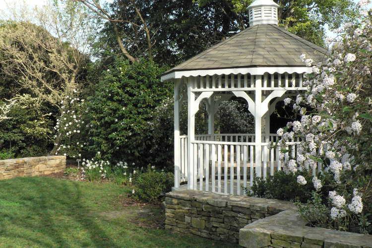 Viburnum ×burkwoodii 'Mohawk' (Egolf hybrid Burkwood viburnum) - Klein-Pringle White Garden