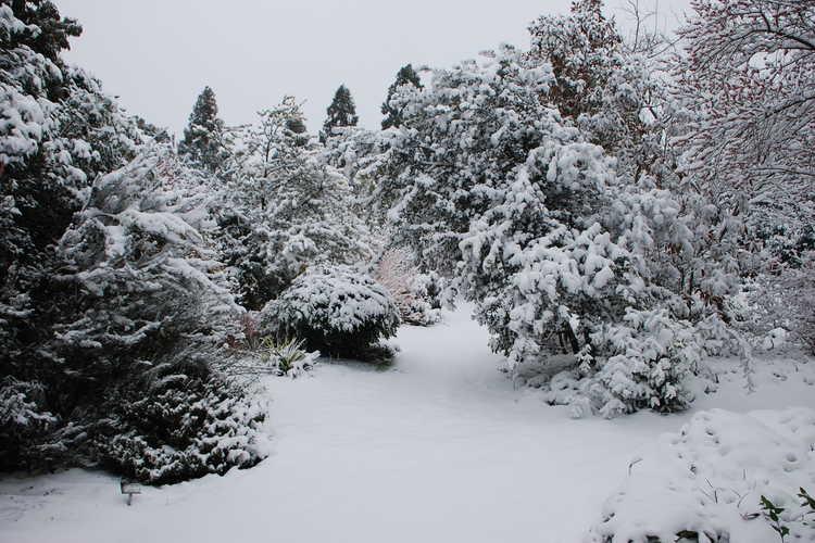 A wintery scene in the Winter Garden