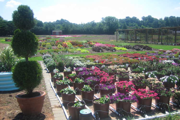 Annual Color Trials Containers