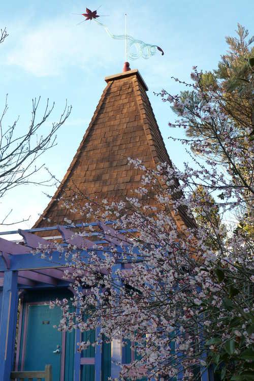 Prunus mume 'Trumpet' (pink Japanese flowering apricot) - The Necessary