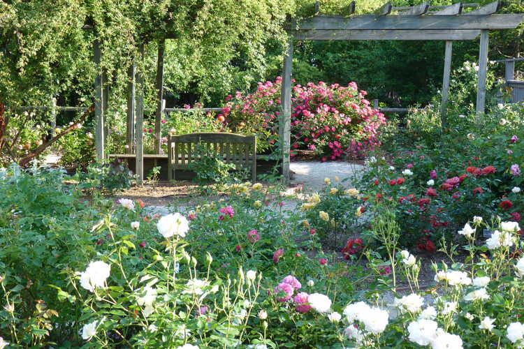Finley-Nottingham Rose Garden