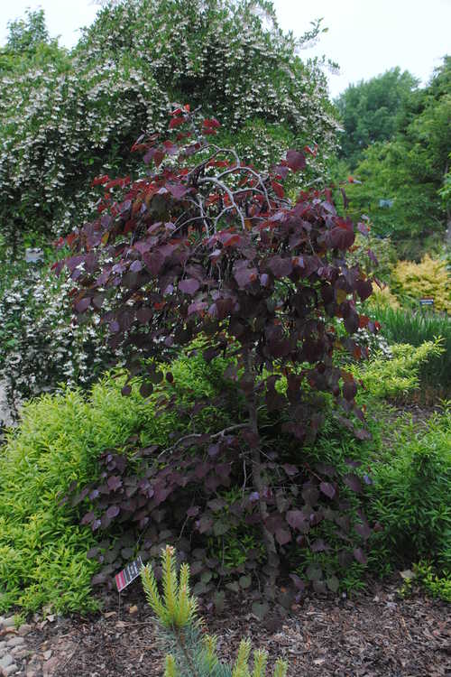 Jc Raulston Arboretum Now Showing May 2 2015