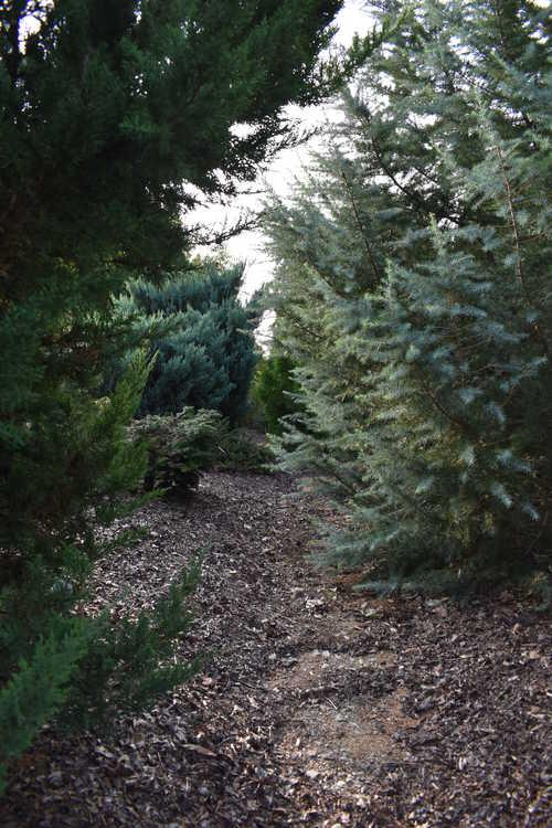 A walk through the Conifer Garden