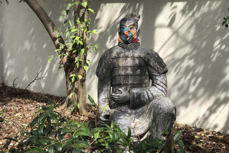 Leucothoe keiskei 'Royal Ruby' (dwarf Japanese leucothoe) - JCRA is open! Please wear your mask.   Check Website for hours.