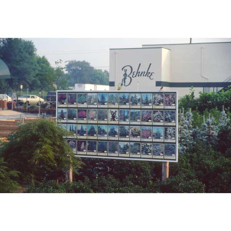 Beltsville