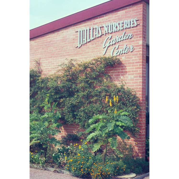 JC Raulston Arboretum   Photographs   Dallas Nurseries ...