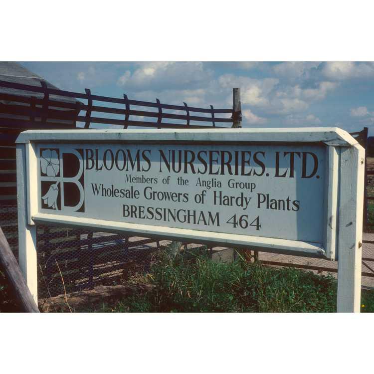 Bressingham