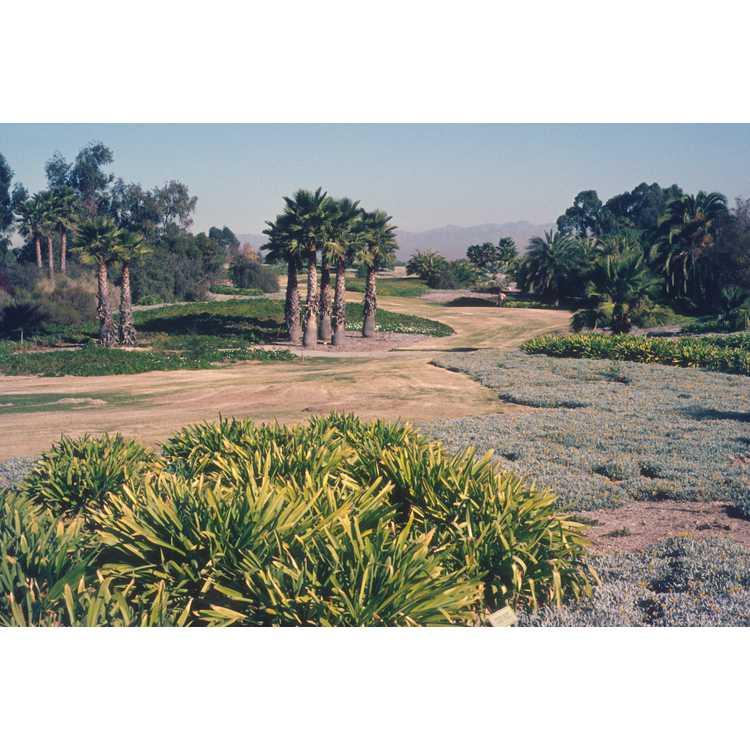 Palos Verdes