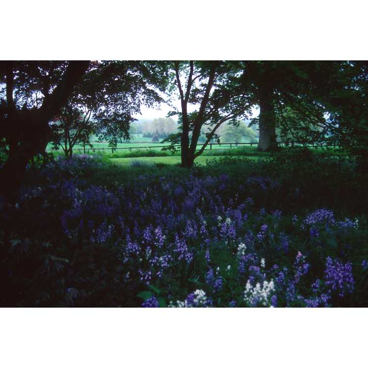 Moreton-in-Marsh, Gloucestershire