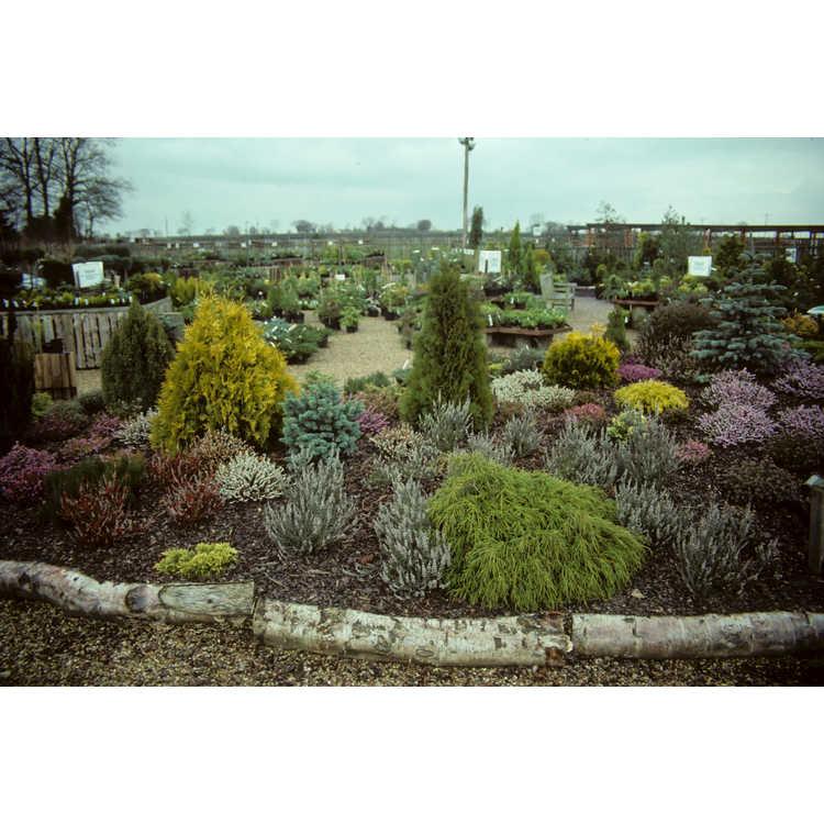 Bressingham, Norfolk