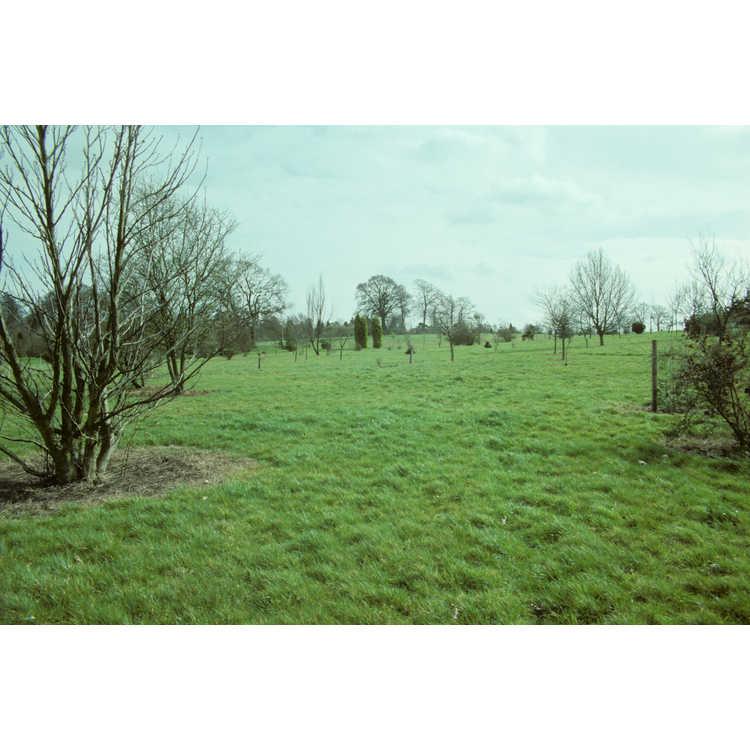 Ampfield, Romsey
