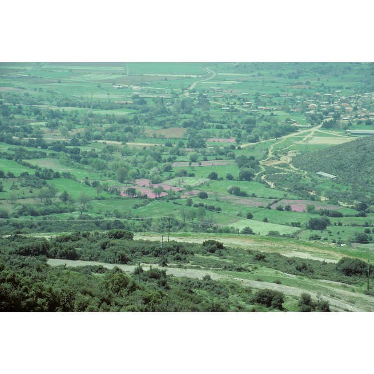 Ioniana