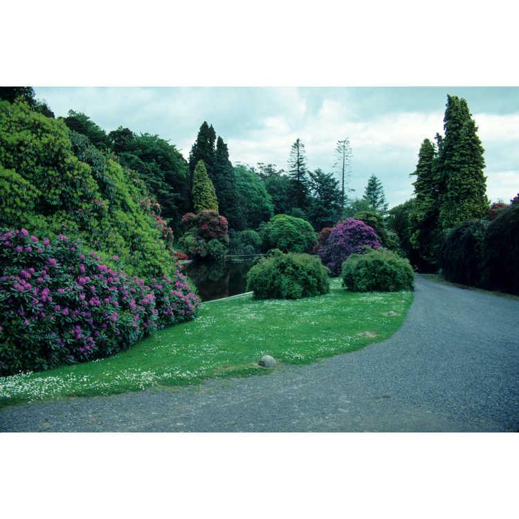 Castlewellan, County Down