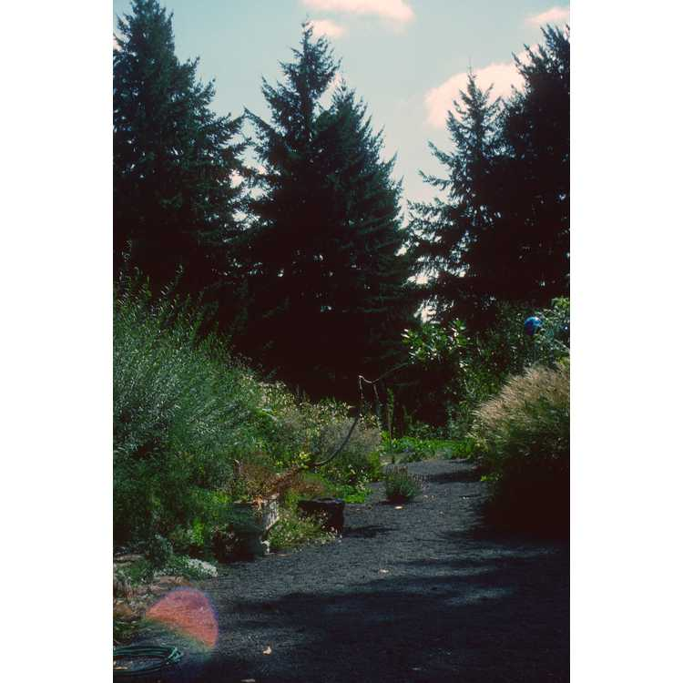 Portland (near)