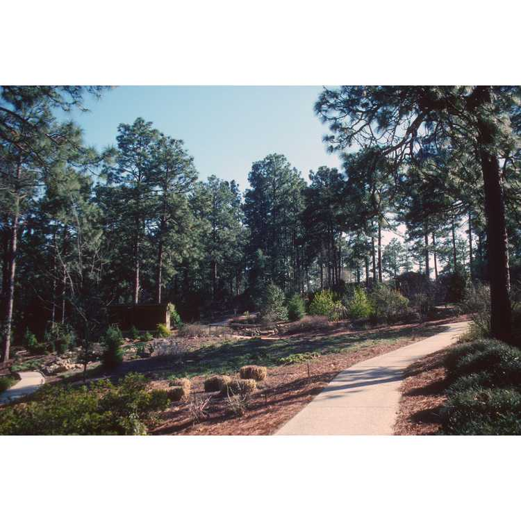 Southern Pines
